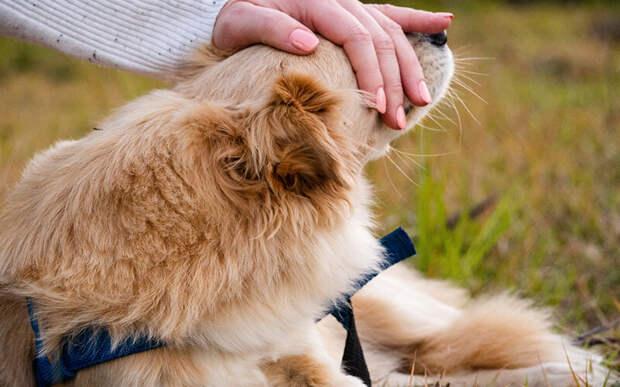 Если нарастающее беспокойство это всего лишь следствие естественного старения организма собаки, важно отнестись к возрасту с уважением и помочь ей справиться с переживаниями. Фото Fernando Benega/Pixabay