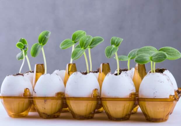 Яичная скорлупа — отличная основа для высадки растений. /Фото: zdorovakrasiva.com