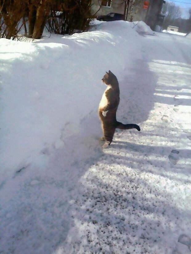 Доказательства того, что коты — это мохнатые пингвины