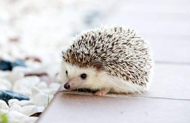 Экзотические животные, которых можно держать дома