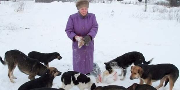 Давайте обсудим бродячих собак и тех, кто их подкармливает. Зачем вы это делаете?