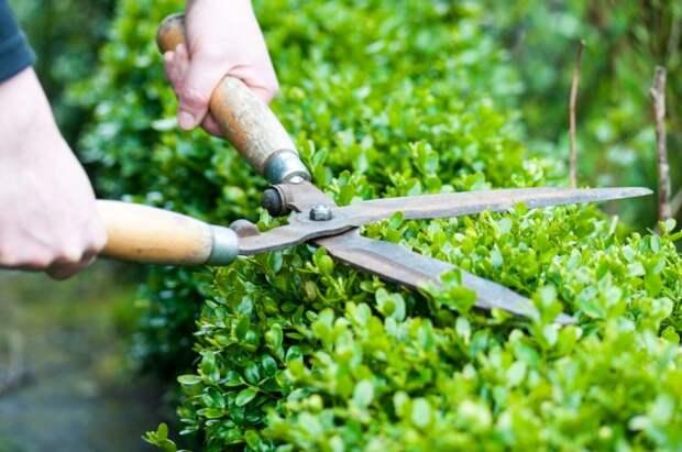 Садовник обрезка деревьев и кустарников