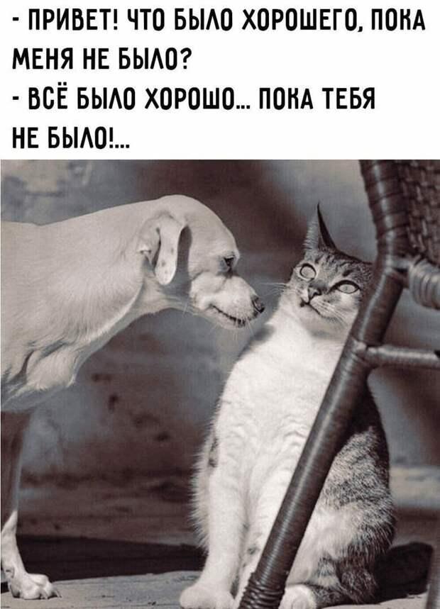 Возможно, это изображение (кот и текст «-привет! что было хорошего, пока меня не было? -всё было хорошо... пока тебя не было!...»)