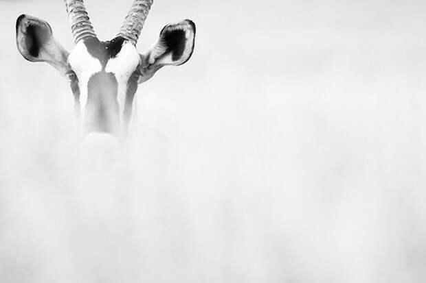 GDT11 Итоги крупнейшего европейского конкурса фотографии дикой природы GDT 2013