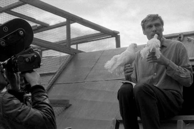 loveandpigeons49 «Любовь и голуби»: детали, факты и редкие кадры из фильма