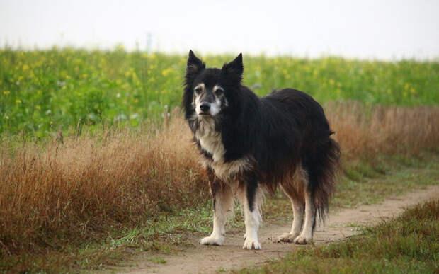 Пожилые собаки толстеют не только из-за того что становятся менее активными. Основная причина- серьезное изменение энергетических потребностей их организма. Фото rihaij/Pixabay