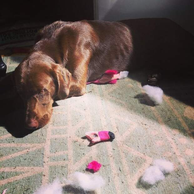 Неслабо так фламинго досталось виноватые собаки, животные, собака раскаивается, собаки