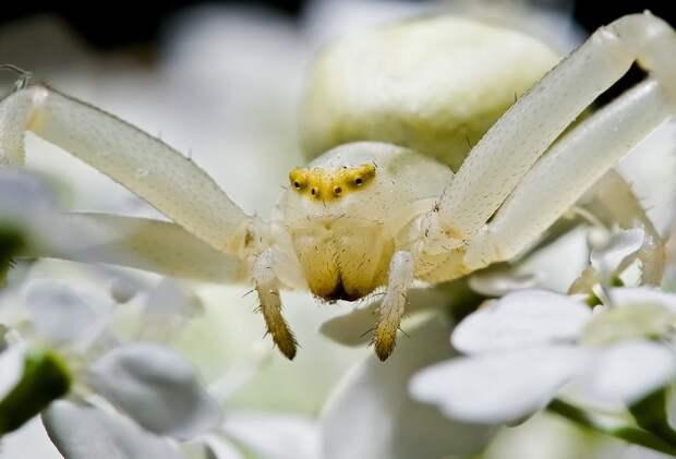 insects38 Портреты насекомых