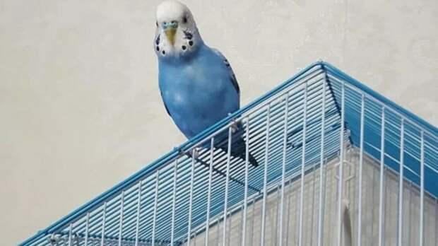 Попугайская песня