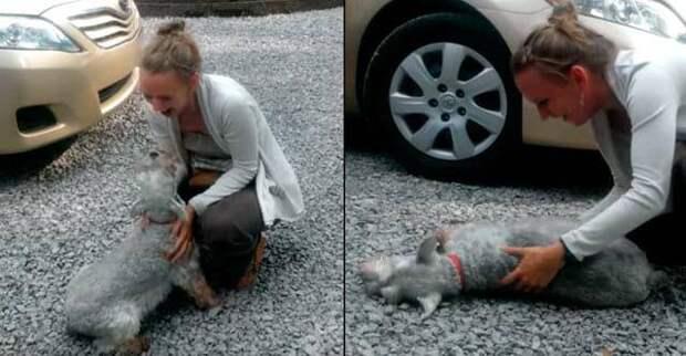 Собака упала в обморок при виде своей хозяйки. Невероятное видео!