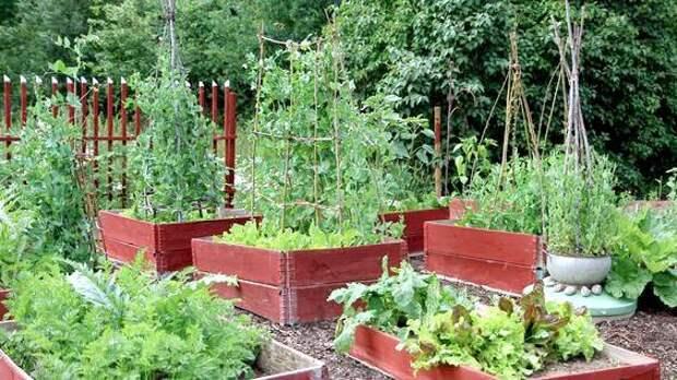 Огород в поддонах. 25 замечательных идей для участка