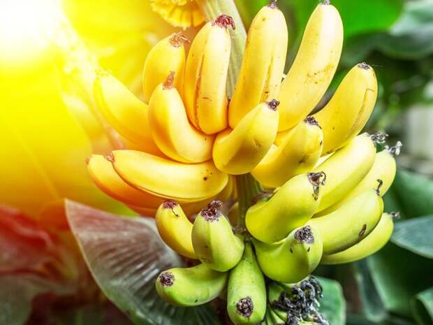 Специалист рассказал, с чем нельзя есть бананы