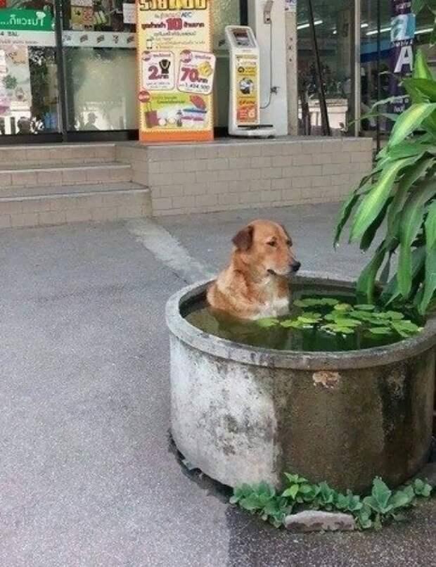 Просто собака, которая решила охладиться животные, приколы, прикольная картинка, собаки
