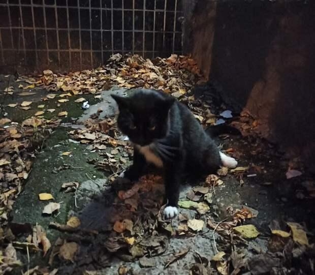 Выпавшего из квартиры на улице Народного Ополчения кота успешно прооперировали