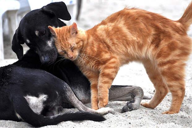 Японские ученые: кошки не глупее собак