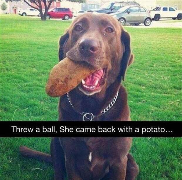 14 чудесных «сокровищ», которые собаки посчитали своим долгом принести хозяевам