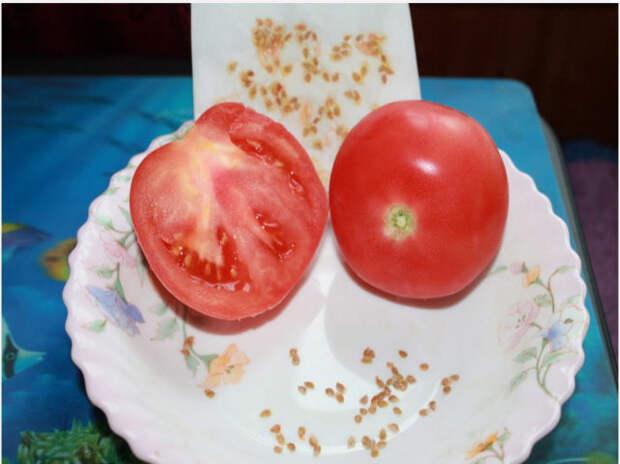 Как заготовить и сохранить семена собственных томатов