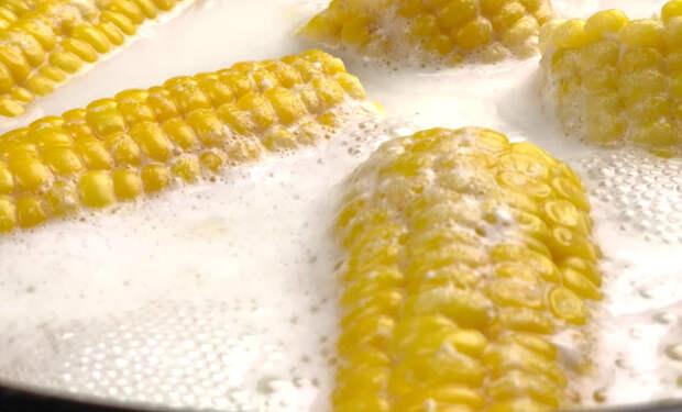 Варим кукурузу в молоке: если заменить воду, становится сочнее