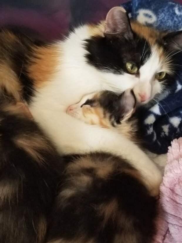 Кошка обнимает котенка