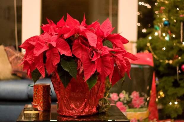 Что подарить садоводу на Новый год: 10 вещей до 500 рублей, которые я бы сама не отказалась получить в подарок