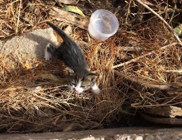 Супруги нашли этого котенка возле мусорного бака и выходили его