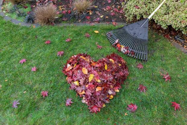 почему не опадают листья осенью