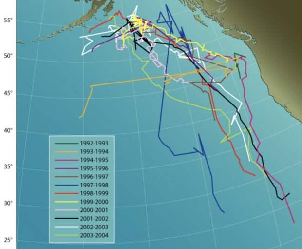 Карта миграции источника звука, который идентифицируют, как «пятидесятидвухгерцового кита» /Woods Hole Oceanographic Institution