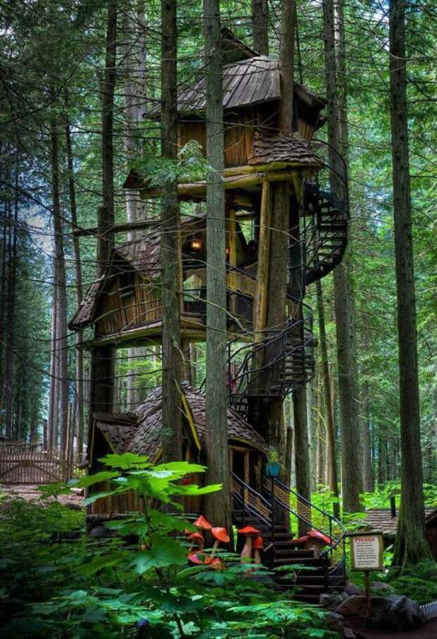 Домик на дереве в Британской Колумбии, в Канаде.