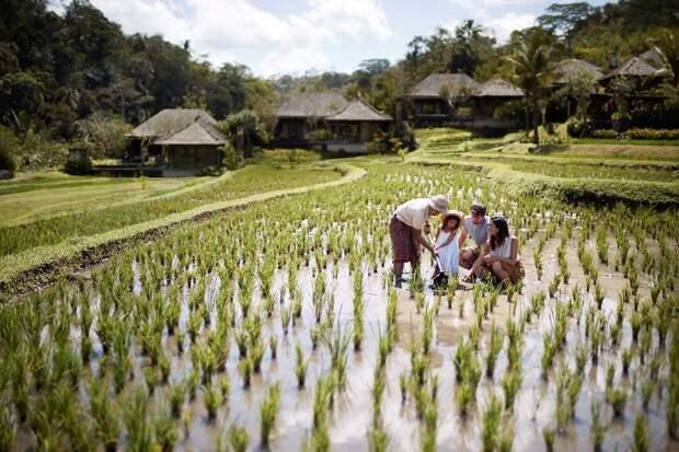 Рисовые террасы и органический огород шефа