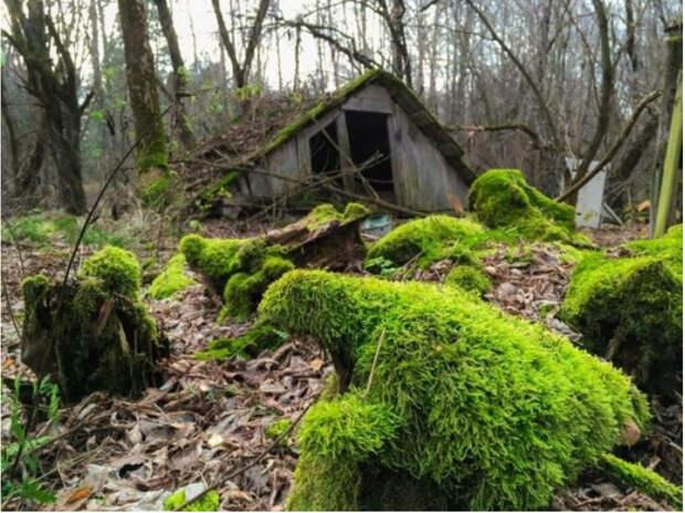Природа всегда забирает свое