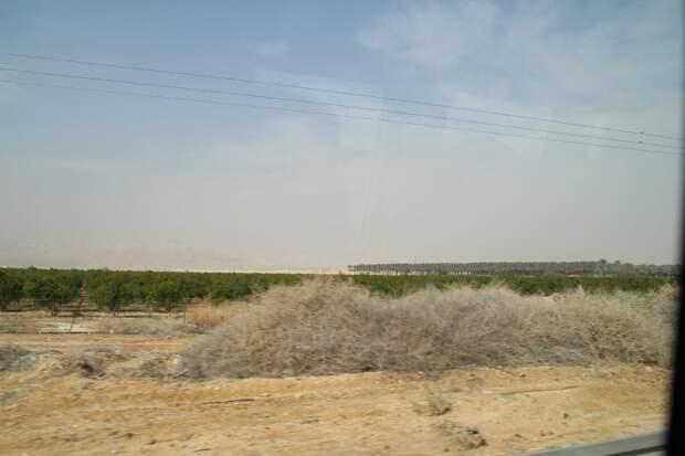 Израиль. Сады в пустыне. Март. Фото из личного архива.