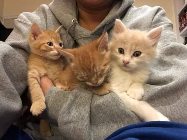 Двум котятам с деформацией грудной клетки подарили второй шанс на жизнь