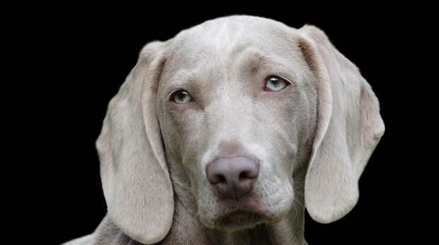 Учёные выяснили, понимают ли собаки человеческую речь