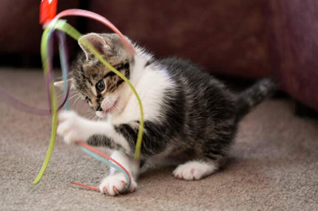 10 кошачьих поступков и привычек, которым зря потакают многие хозяева