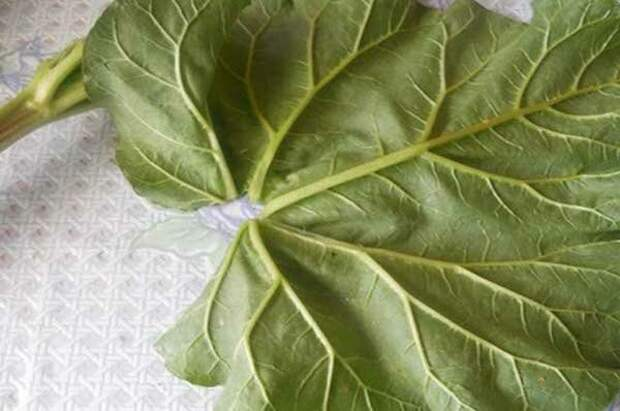 Куда с пользой пристроить листья ревеня? Делюсь своими идеями их применения в быту и огороде