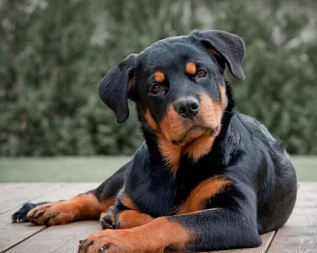 Вот какие собаки лучше всего подходят для вашего здоровья! Эксперимент и его результаты