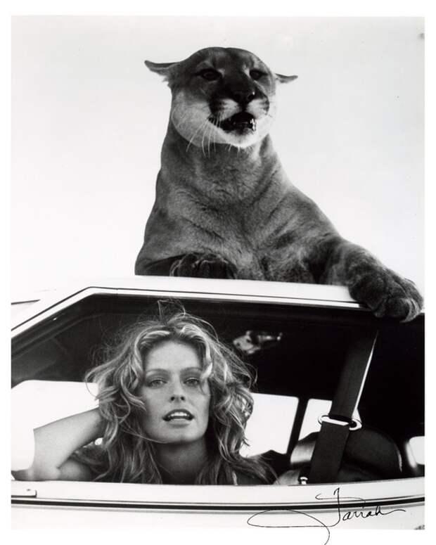 Кошки и красавицы. Дуэт красоты и грации...