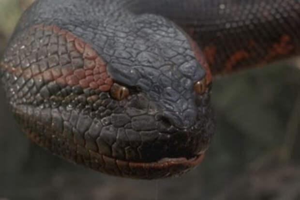 Самые опасные создания из глубин Амазонии