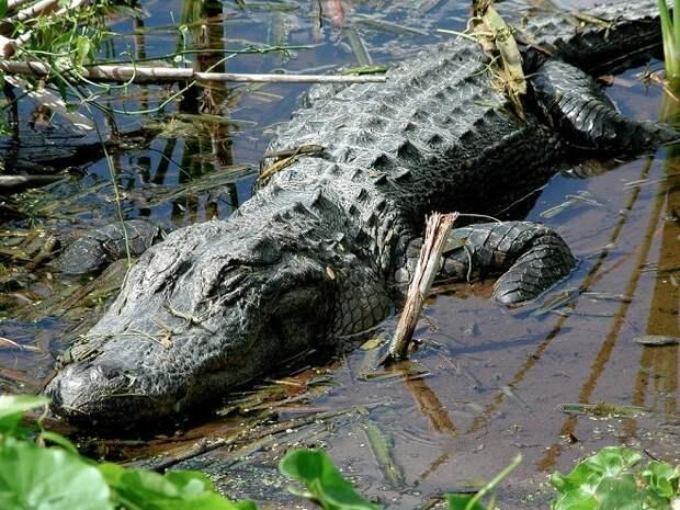 «Он схватил меня и стал тащить»: школьник вырвался из пасти крокодила благодаря смелости