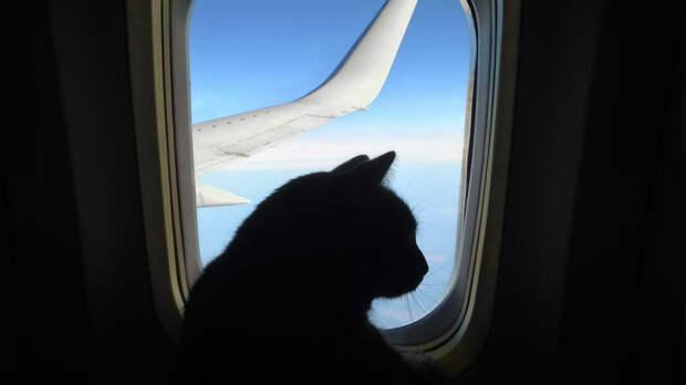 Кошка в самолете - РИА Новости, 1920, 15.09.2020