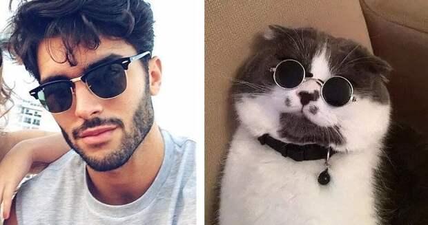 20 забавных коллажей, на которых наглядно видно, что у котов и красивых мужчин есть что-то общее животные, кот, кошки, мужчина, поза, прикол, юмор