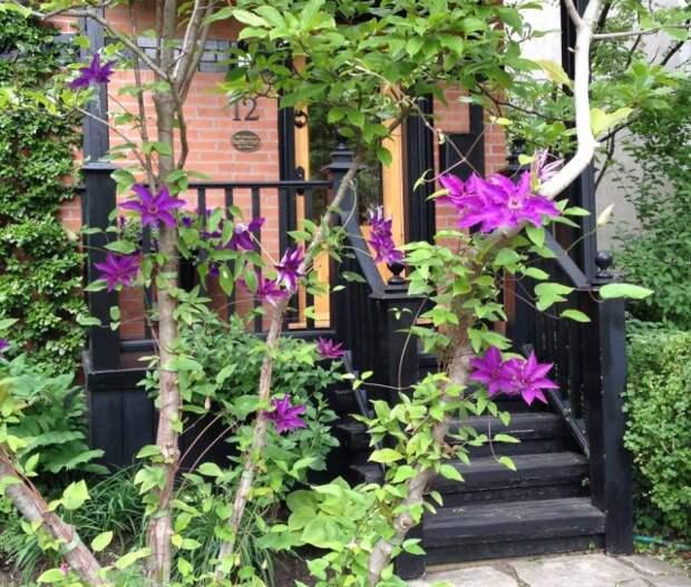 Естественная подпорка для растений