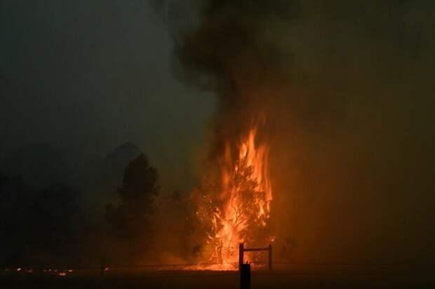Семья Ирвинов помогает животным, пострадавшим от пожаров