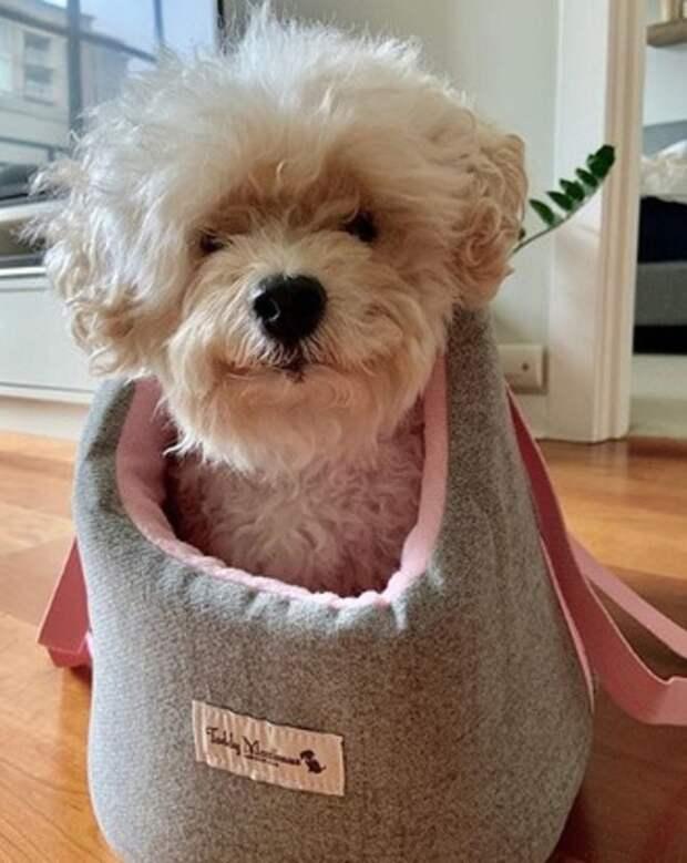 Собака в тапке