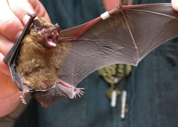 Роспотребнадзор проверит летучих мышей в России на коронавирусы