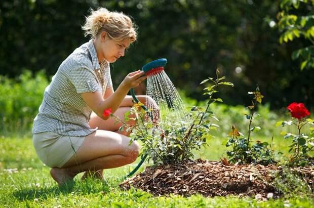 Мульча и дождевая вода. Как избежать иссушения почвы на участке?