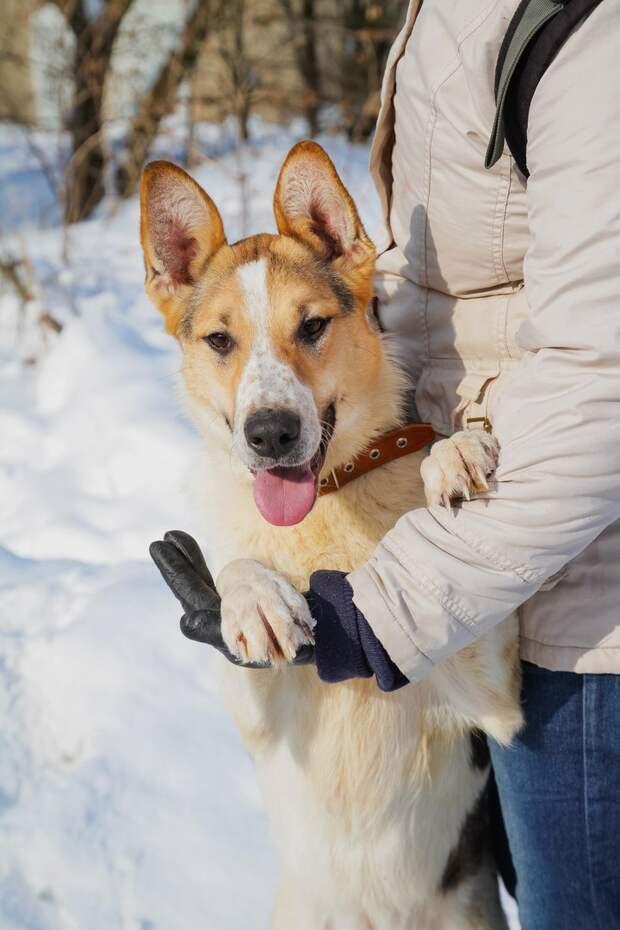 Собаку привязали к скамейке в парке и больше к ней не возвращались волонтер, дворняга, порода, приют, собака