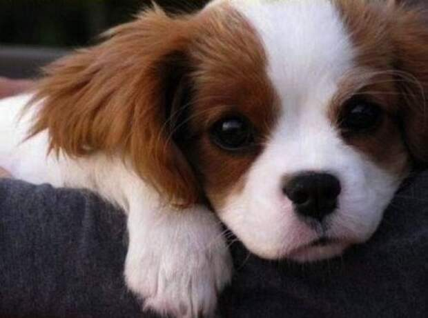Милые щеночки (42 фото)