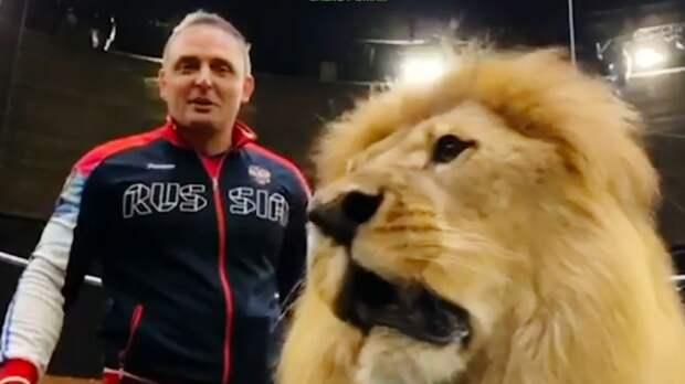 Дрессировщик Аскольд Запашный предложил Хабибу тренировку со львами: «Уверен, ты даже с такими справишься». Видео