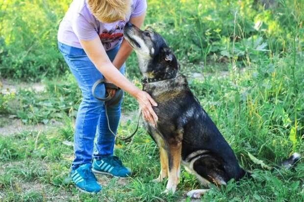 Хозяина забрали в армию, а его собака оказалась никому не нужна история, лапы, собака, черная собака